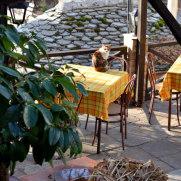 Кошки. Макриница. Греция