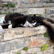 Кошки. Агиос Николаос, Крит, 2015