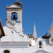 Аисты. Фару, Португалия. 2010