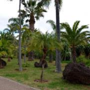 Ботанический сад Мадейры. 2016