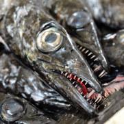 Рыба Эшпада. Рынок Фуншала, Мадейра, 2016