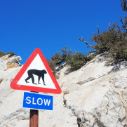 Знак. Гибралтар, 2017