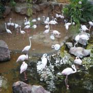 Фламинго. Биопарк Фуэнхиролы, 2017