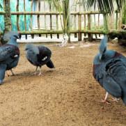 Голуби. Биопарк Фуэнхиролы, 2017