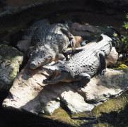 Крокодилы. Биопарк Фуэнхиролы, 2017