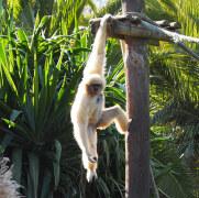 Зоопарк в Лагуше, Алгарве, 2020