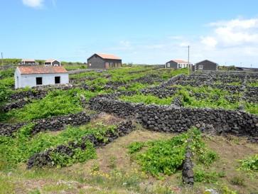 Виноградники в Бишкойтуш (Терсейра, Португалия)