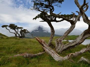Остров Пику. Вулкан Пику