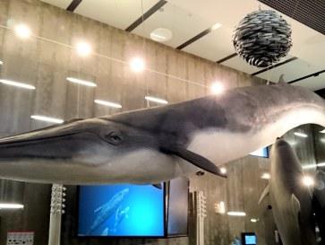 Музей китового промысла. Канисал. Мадейра