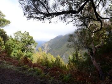 По дороге к леваде Риску. Мадейра