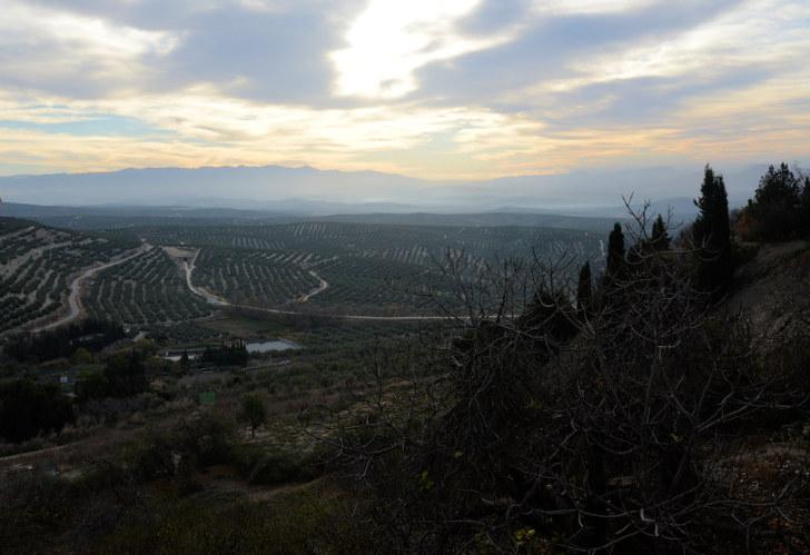 Оливковые плантации. Убеда, Испания