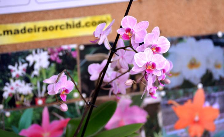 Сад орхидей, Фуншал, Мадейра, 2016